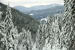 Mountain winter forest. Landscape of Rhodope mountains shoot from Chepelare ski resort, Bulgaria Stock Photo