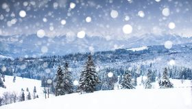 Mountain winter landscape. Christmas snowfall in the mountains royalty free stock photography