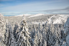 Mountain in winter. Winter landscape, fir forest covered by snow and mountain peaks in the distance, Mt. Kopaonik, Serbia Stock Photography