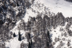 Mountain wood in snow from above, Orobie Stock Photos