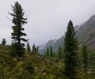 Mountain woodlands in rainy weather Stock Photo