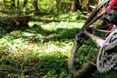 Mountainbike i grön skogsikt från cykelhjulet royaltyfria bilder
