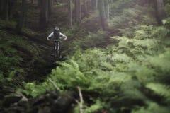 Mountainbiker下坡森林自行车 免版税库存照片