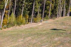 Mountainbiker на спуске через лес стоковые фотографии rf