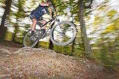 Mountainbiker скачет в древесины вены Стоковые Изображения