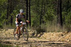 Mountainbiker Stock Image