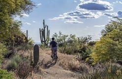 Mountainbiker auf einer üppigen Wüsten-Spur in Arizona stockfoto
