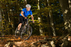 Mountainbiker in a downhill Stock Image