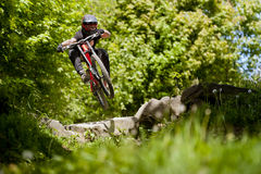Mountainbiker-Fahrrad Forest Downhill Stockfotografie
