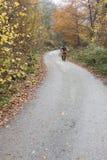 Mountainbiker monte une bicyclette photos libres de droits