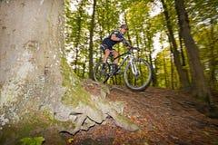 Mountainbiker salta de una raíz imagenes de archivo