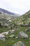 Mountainbikers en vallée de Tyroler Ziller, Autriche Photographie stock