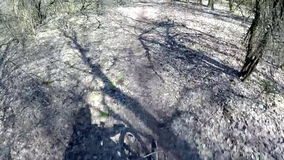 Mountainbiking in the forest stock video footage