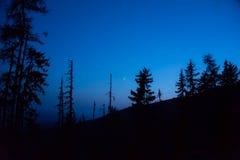 Mountaine noc z ciemnymi drzewami i księżyc Obrazy Stock