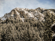 Mountaine Piatra Craiului Румыния Стоковые Изображения RF