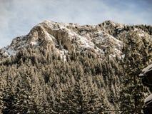 The mountaine Piatra Craiului Romania Royalty Free Stock Images