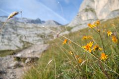 Mountaineering in marmolada glacier in dolomites Royalty Free Stock Images