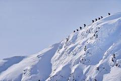 Mountaineers on Fagaras Mountains ridge in winter Stock Photography