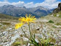 Mountainflower fotografia stock libera da diritti