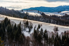 Mountainous area on winter morning. Mountainous rural area of Carpathians in winter on fresh frosty morning Stock Image