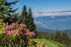 Mountainous of chartreuse,isere,france. Park regional de chartreuse en isere stock image