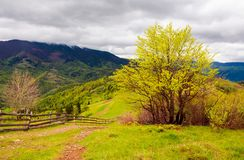 Mountainous countryside in springtime. Fence down the hill along the country road. tree on the grassy hill. distant mountains under the overcast sky royalty free stock photography