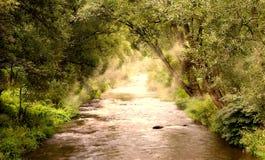 Mountainous creek Royalty Free Stock Image