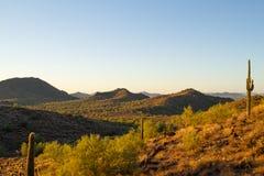 Morning Desert Landscape royalty free stock photos