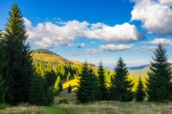 Mountainous forest and clouds. Tall spruce trees on hillside. mountain peak and valley in the distance. gorgeous cloudscape. Location Apuseni Natural Park of stock photography
