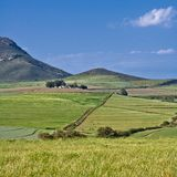 Mountainous green wheat field Royalty Free Stock Images