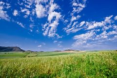 Mountainous green wheat field Stock Photo