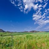 Mountainous green wheat field Stock Images