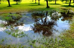 Mountainous impression. Mountain mirroring in a puddle after a summer rain Stock Photography