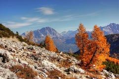 Mountainous Landforms, Mountain, Wilderness, Tree Royalty Free Stock Photography