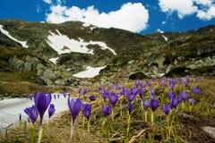 Free Mountainous Landscape Stock Photos - 11809893