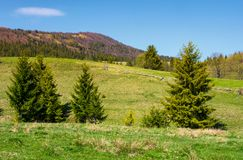 Mountainous landscape with coniferous forest. Lovely springtime scenery at the foot of Borzhava mountain ridge. location - Pylypets, TransCarpathian region Stock Image