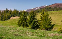 Mountainous landscape with coniferous forest. Lovely springtime scenery at the foot of Borzhava mountain ridge. location - Pylypets, TransCarpathian region Stock Photo