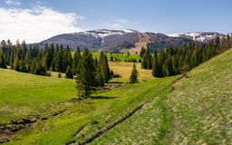 Mountainous landscape with coniferous forest. Lovely springtime scenery at the foot of Borzhava mountain ridge. location - Pylypets, TransCarpathian region Royalty Free Stock Image
