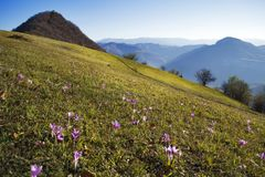 Beautiful Summer Mountain Landscape with Forested  Hills. Mountainous landscape with forested hills. Beautiful summer scenery in Bulgaria Stock Photos