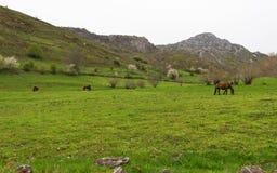 Mountainous Landscape with Horses Stock Images