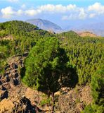 Mountainous landscape with pines, blue sky and clouds from the summit of Gran canaria, Canary islands Stock Photos