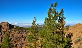 Mountainous landscape with pines and blue sky from the summit of Gran canaria, Canary islands. Landscapes from the summit of Gran canaria Royalty Free Stock Photo