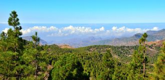 Mountainous landscape with pines and blue sky from the summit of Gran canaria, Canary islands. Landscapes from the summit of Gran canaria Royalty Free Stock Images