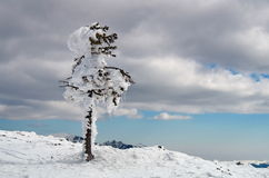 Winter mountain landscape. Snow and ice at high altitude - Ciucas Mountains, landmark attraction in Romania Royalty Free Stock Photos