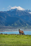 Mountainous life Stock Images