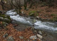 Mountainous rapid river with clear water in the forest in the mountains Dirfis on the island of Evia, Greece royalty free stock photos