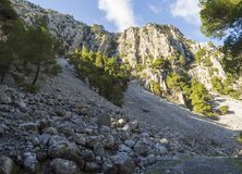 Mountainous rapid river with clear water and plane trees in the forest in the mountains Dirfys on the island of Evia, Greece. Mountainous rapid river with clear royalty free stock photography