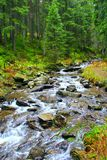 Mountainous river in the forest Stock Photos