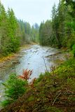 Mountainous river in the forest of Carpathian mountains. Beautiful landscape with speed mountainous river in the forest of Carpathian mountains. Speed river Stock Image