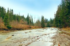 Mountainous river in the forest of Carpathian mountains. Beautiful landscape with speed mountainous river in the forest of Carpathian mountains Stock Photography